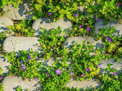 Základová fotografie zdarma na téma Budapešť, evropa, fialová