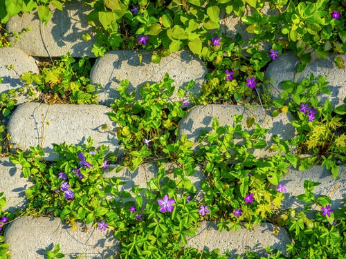 Free stock photo of Budapest, europe, flower