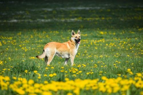 Free stock photo of animal photography, big dog, lithuania