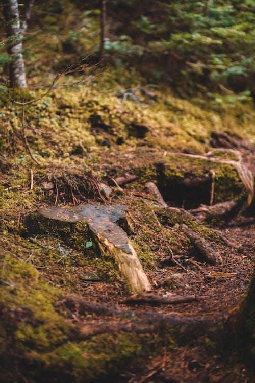 Immagine gratuita di albero, ambiente, bagnato