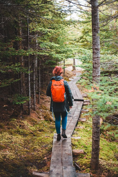 Back view of faceless female hiker in warm outfit and backpack walking on wooden pathway among green trees in autumnal forest