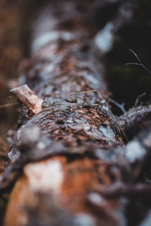 Dry tree bark in dark forest
