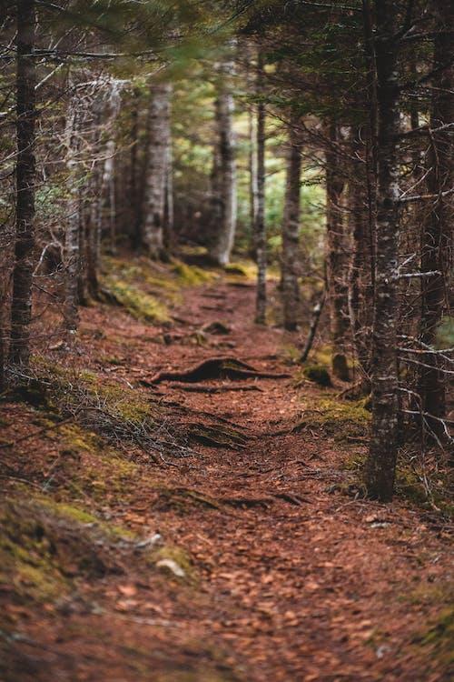 Immagine gratuita di ambiente, armonia, autunno, boschi