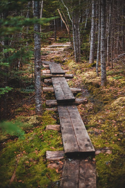 Wooden path among trees in forest