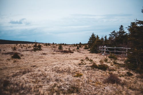Serene landscape of dry grassy meadow located near evergreen conifers in early autumn morning