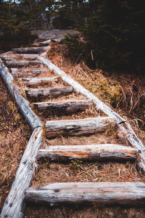 Timber path running through dry grassy autumn woods