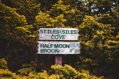 Old weathered wooden signs with green directing inscriptions located in abundant evergreen woods