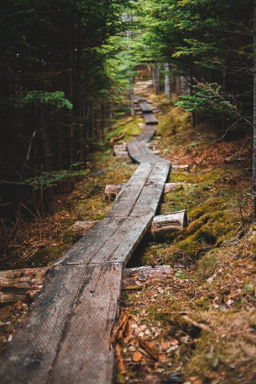 Brown Wooden Pathway in Forest