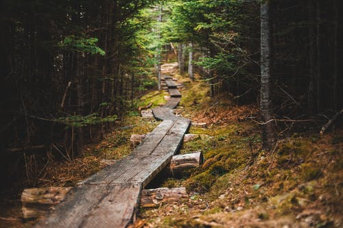 Brown Wooden Pathway on Forest
