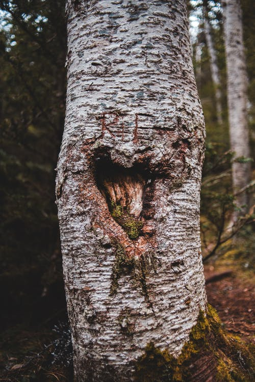 Old tree stem with heart shaped carving in forest