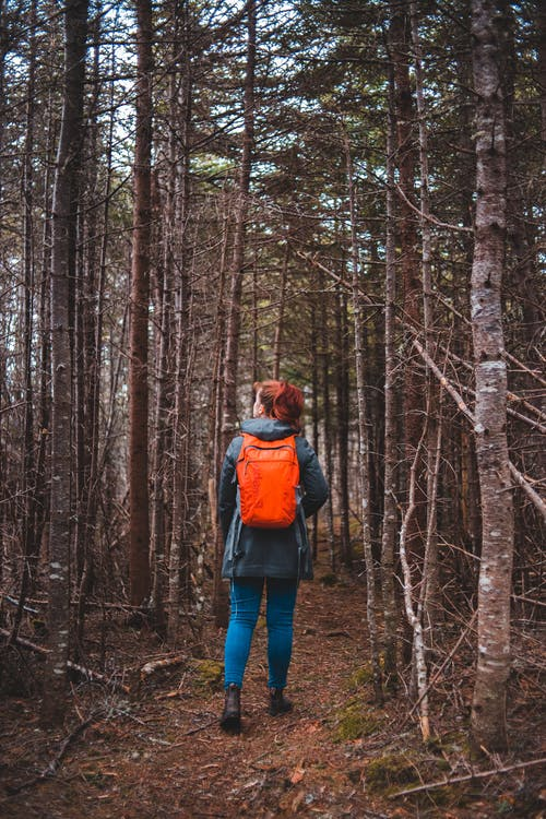 Photo of Woman Walking in the Woods