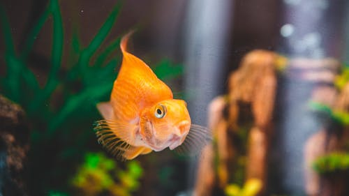 Free stock photo of aquarium, fish