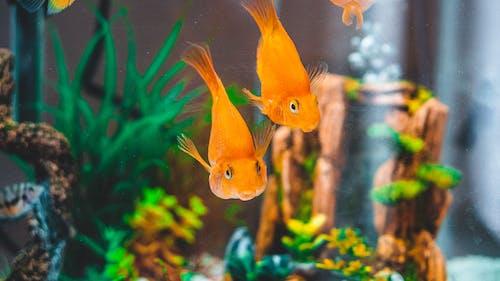 Fotos de stock gratuitas de acuario, animal, animales acuáticos, color