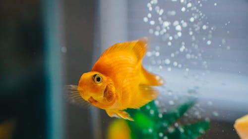 Fotos de stock gratuitas de acuario, agua, al aire libre, bajo el agua