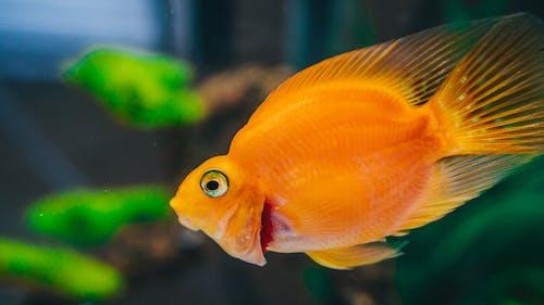 Fotos de stock gratuitas de acuario, acuático, agua, aleta