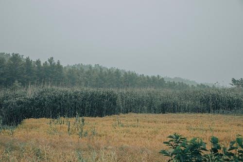 Základová fotografie zdarma na téma botanický, bujný, flóra, harmonie
