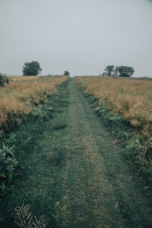 Green Grass Field Under Gray Sky