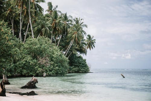 Green Palm Trees on Island Surrounded by Sea Water