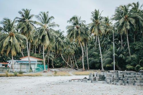 Green Palm Trees on White Sand Beach