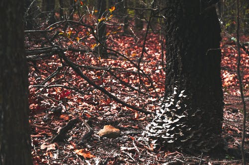 Free stock photo of forest, fungus, tree, trees