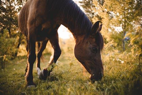 Безкоштовне стокове фото на тему «атмосферний, випас, голова коня»