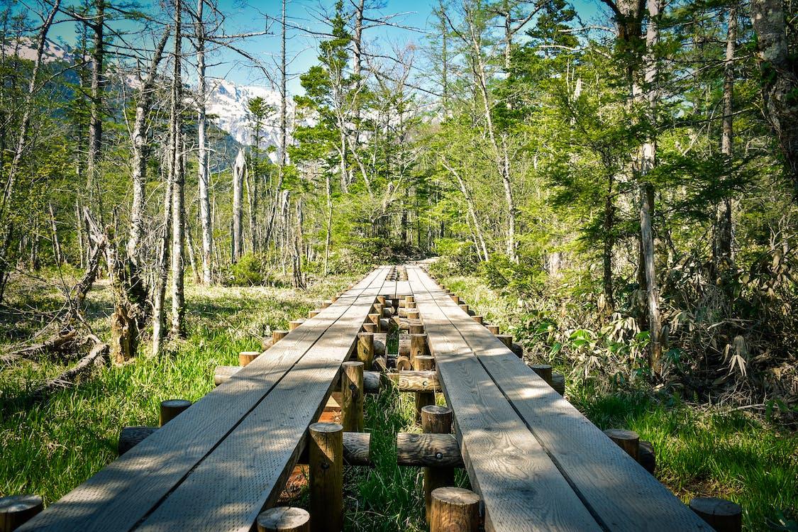 Foto stok gratis alam, berjalan, di luar rumah