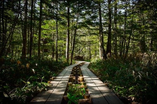 Brown Wooden Pathway Surrounded by Green Plants and Trees