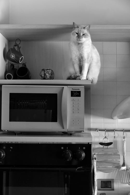 Cat on Microwave Oven in Grayscale Photography