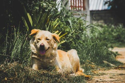 Foto stok gratis alam, anak anjing, anjing
