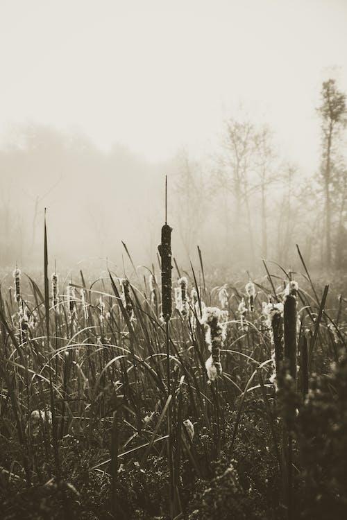 Immagine gratuita di monocromatico, natura, nebbia, nero di seppia