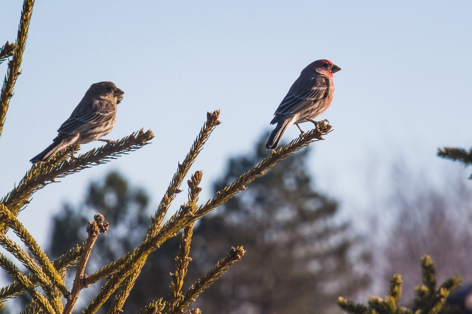 Two Sparrows on Branch Close-up Photography