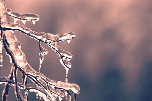 Selective Focus of Frozen Tree Twigs