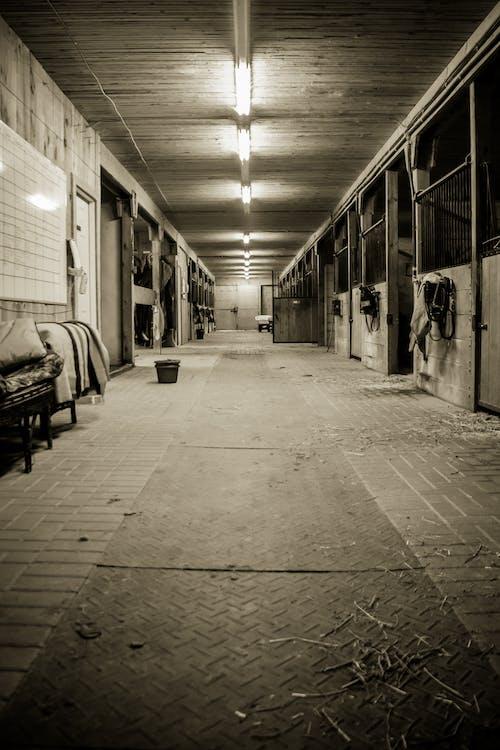 Základová fotografie zdarma na téma černobílá, farma, konská stodola, monchromu
