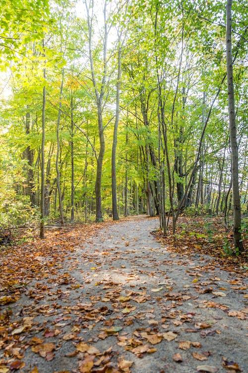 Immagine gratuita di escursione, foresta, percorso, sentiero