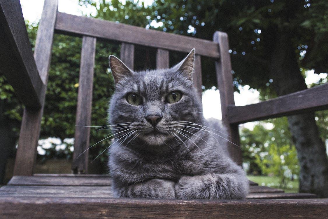 macska, macskaarc, macskafej