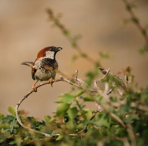 Photo of Bird Perched on Twigs