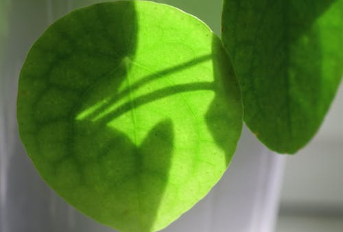 Free stock photo of fetus, leaf, plant