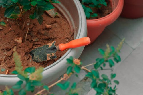 Pot with seedling and gardening spatula on floor