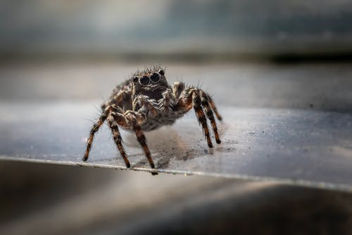 Selective Focus Photo of a Spider