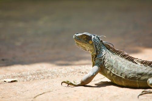 Fotobanka sbezplatnými fotkami na tému bočný pohľad, exotický, fotografie zvierat žijúcich vo voľnej prírode, horizontálny