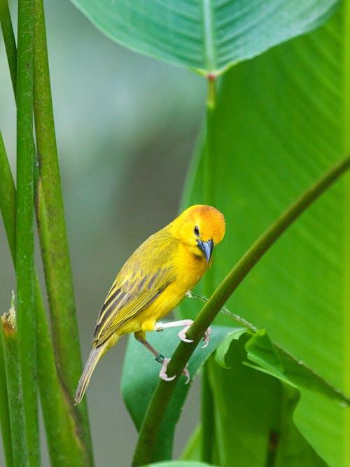 Yellow Bird on Green Stem