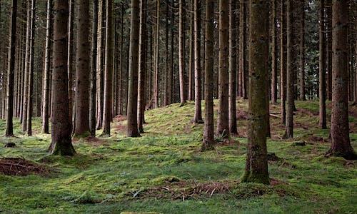 Безкоштовне стокове фото на тему «горизонтальний, дерева, зростання»