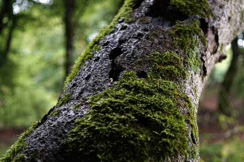 Mossy tree trunk in forest in daytime