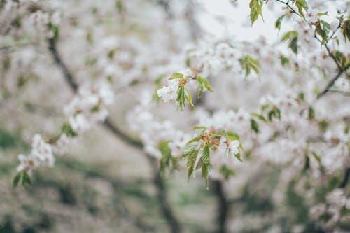 Photos gratuites de brouiller, croissance, délicat, fleurir
