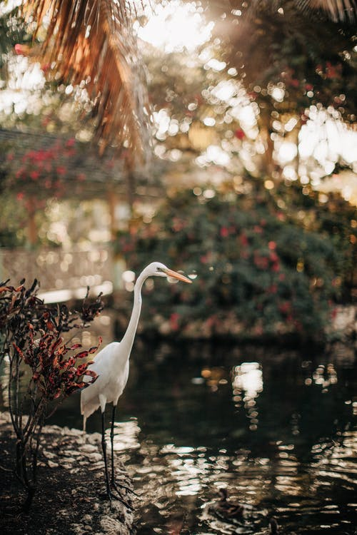 Photo of White Heron Near Water