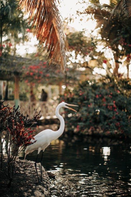 Photo of White Heron Near Body of Water