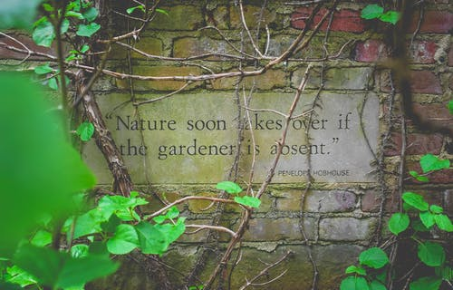 From above author citation on signboard on old brick wall near growing creeping plants with colorful leaves and dry twigs