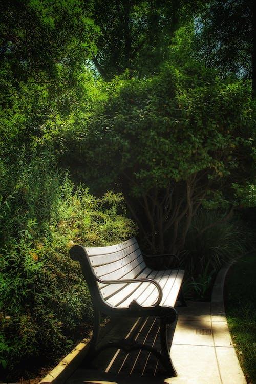 Gratis lagerfoto af alene, bænk, ensomhed, naturpark