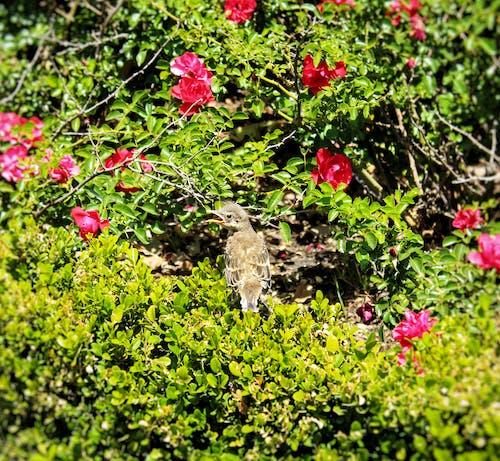 Gratis lagerfoto af by fugle, fugl, fuglerede, lille fugl