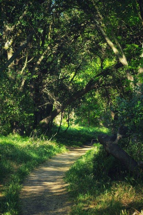 Gratis lagerfoto af grusvej, natur, scenics - nature, skov baggrund